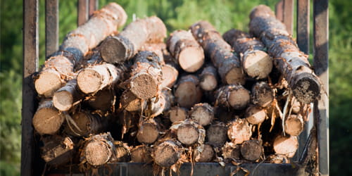Diversos troncos de madeira empilhados em um reboque.